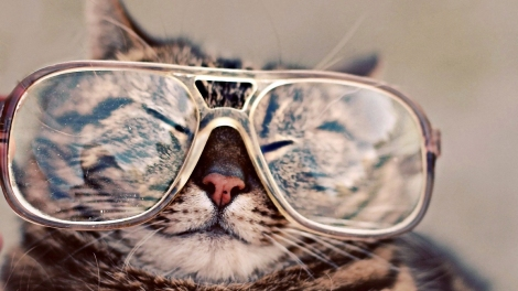 cat-wearing-glasses-wallpaper